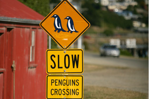 Penguins-Crossing-Oamaru