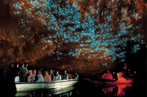 Waitomo-Glowworm-Caves-tour